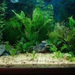 Membersihkan Kerak Kaca Aquarium