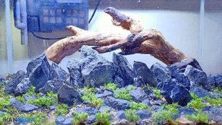 3 Cara Membuat Kayu Aquascape Tenggelam