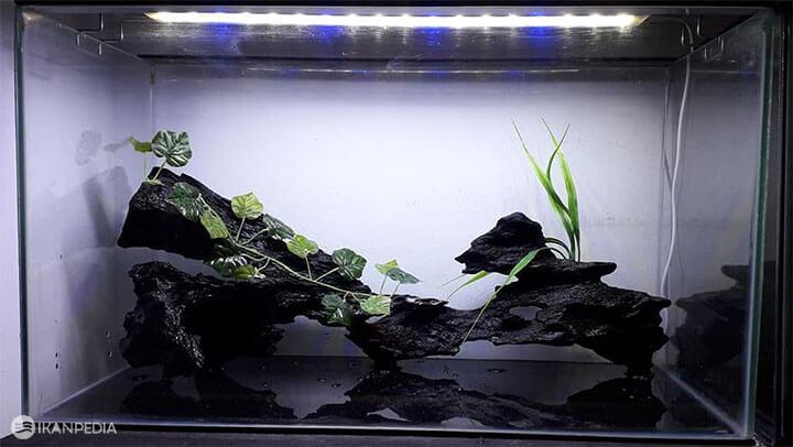 Cara Pasang Lampu Celup Aquarium